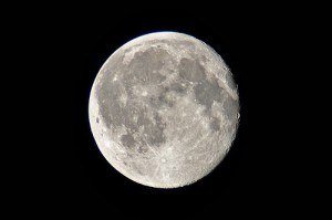 A Hold hatása az állatvilágra