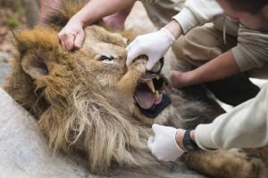Orvosi vizsgálaton esett át a Nyíregyházi Állatpark legidõ