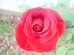 Mester Virág