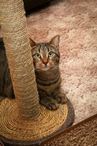 Macskabútor a cicák örömére